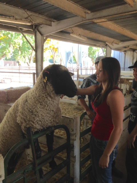 One of my students with a Suffolk Ram at the CSUC college farm